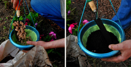 Как посадить петунию