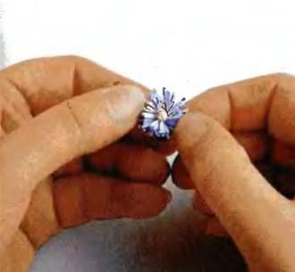 Делаем маргаритку с бахромчатым краем в технике квиллинг в фото