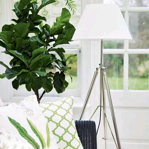 Оранжерея дома в фото