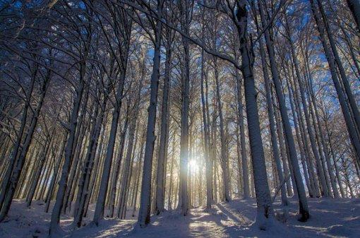 Сонце крізь зимовий ліс