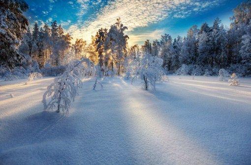 Схід сонця в лісі взимку