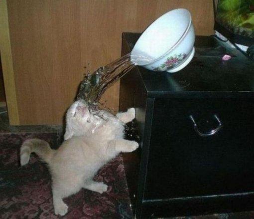 Кіт обливається водою