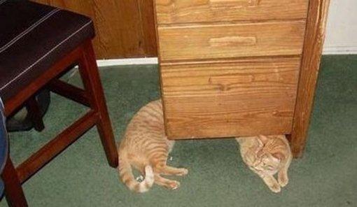 Смішні коти фото