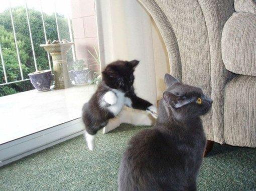 Коти деруться фото