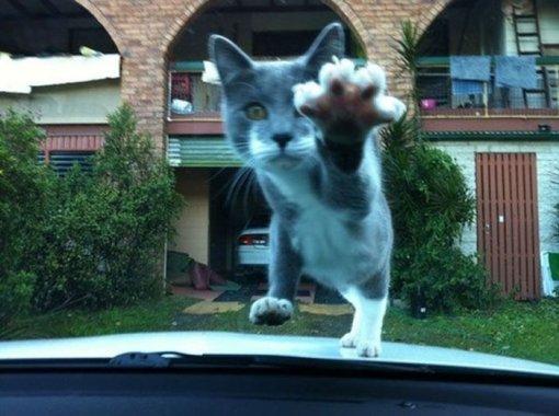Кіт нападає фото