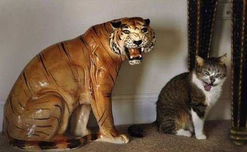 Смішний кіт картинка