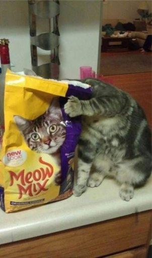 Смішна кішка фото