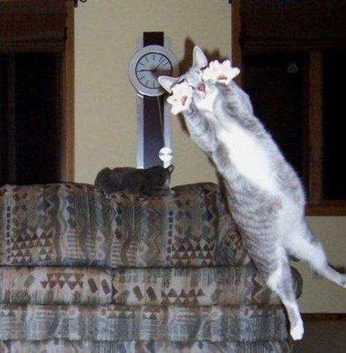 Кіт прига фото