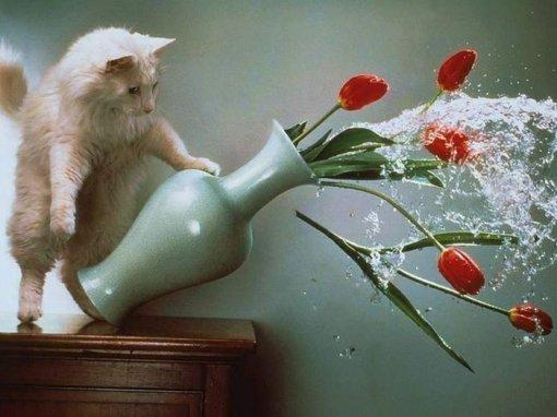 Кіт розбиває вазу