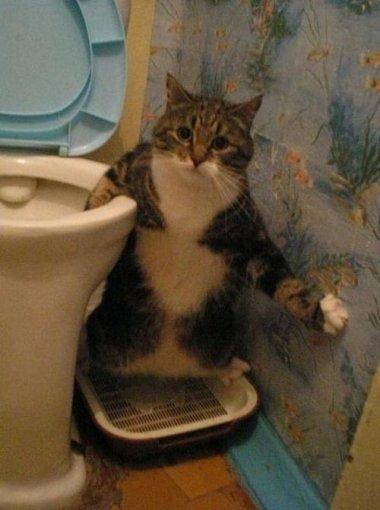 Кіт на унітазі