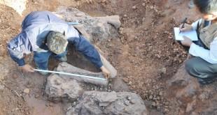 У Китаї виявили скам'янілі кості двох динозаврів