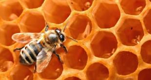 Пчелиная фабрика: мед, воск, пыльца, перга, обножка, забрус, прополис, подмор