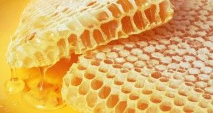 Какими свойствами обладает мёд? В чем его польза?