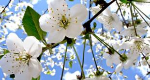 Цветение в природе. Что оно дает?