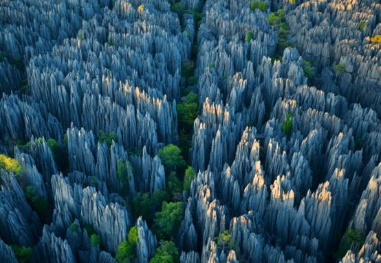 Каменный лес Мадагаскара - чудо природы