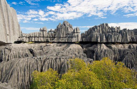 Каменный лес Мадагаскар