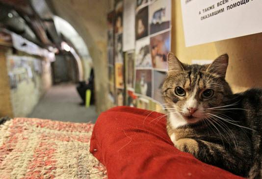 Кот охраняет музей