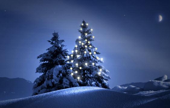 Кто придумал ставить елку на Новый Год?