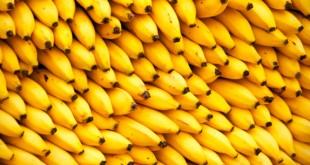 Банан: виды, польза, история