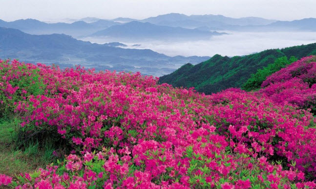 Долина роз в Болгарии: миллион алых роз воочию