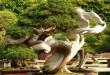 Созерцание дерева бонсай приносит покой и умиротворение