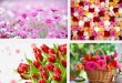Запоминающийся презентиз живых цветов