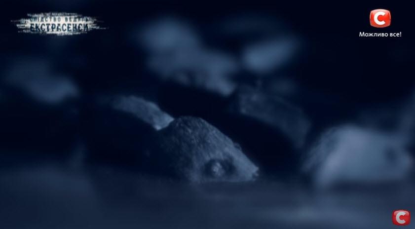Следствие ведут экстрасенсы 02.05.2016: Преследуемый род (выпуск 28)