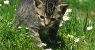 Аллергия на кошек у детей и взрослых, симптомы. Как проявляется?