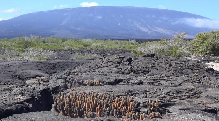 Галапагосские острова: уникальные растения и животные