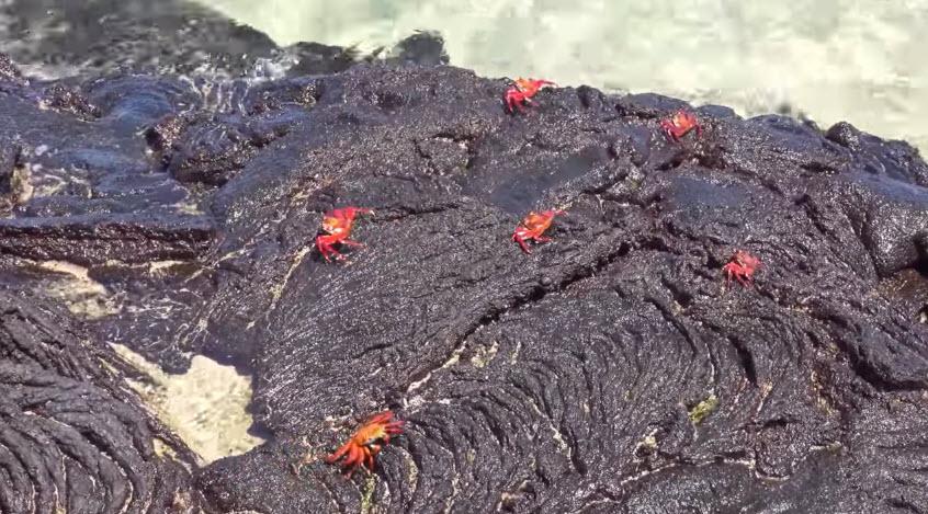 Галапагоські острови: унікальні рослини і тварини