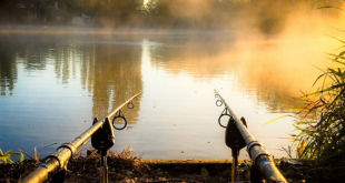 Beginners Guide rods